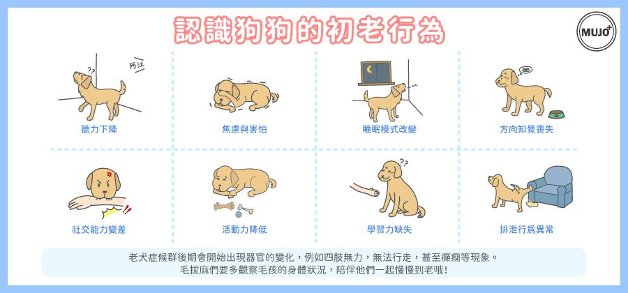 你家狗狗步入熟齡了嗎?快來看看狗狗的初老行為有哪些!