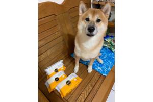 擦拭狗狗的腳掌能減少狗狗不愛的摩擦力,超級推薦的一款濕拭衛生紙。by陳O君