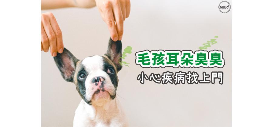 【寵物耳朵發炎怎麼看? 內耳炎 中耳炎 外耳炎 差在哪? 潔耳液該怎麼挑選?】